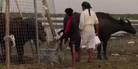 بسبب كورونا.. سكان أهوار العراق يبيعون أعز ما يملكون بأبخس الأثمان