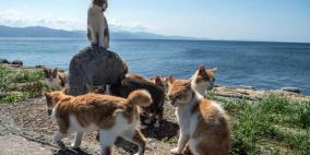 """""""طرد جماعي"""" لعشرات القطط.. وتحرك عاجل لجمعيات الحيوان"""