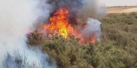جنين: احتراق 1400 شجرة زيتون