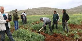 نابلس.. الاحتلال يقمع فعالية لزراعة أشجار زيتون في أراضي بورين
