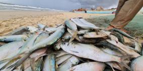 إسرائيل تسمح باستئناف تسويق أسماك البحر المتوسط