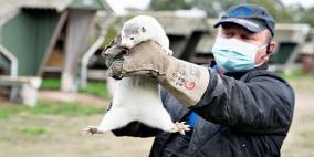 أول لقاح ضد كورونا لحماية الحيوانات.. ما هي فعاليته!