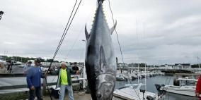 أسترالي يصطاد سمكة تونة بوزن 271 كيلو