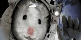 20 فأرا في مهمة فضائية