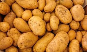 ماذا تعرف عن فوائد البطاطا؟