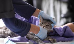 منظمة الصحة: الحيوانات قد تصاب بفيروس كورونا