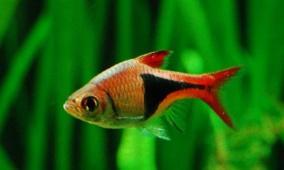 """""""يأس سمكة"""" يدل العلماء على دواء الاكتئاب!"""