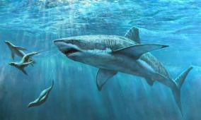 أطنان من لحوم أسماك القرش.. والسلطات تتدخل باللحظة الحاسمة