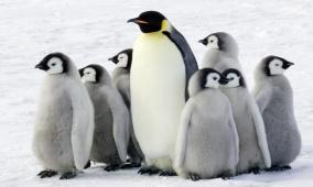 اكتشاف بقايا مومياوات للبطاريق في القطب الجنوبي