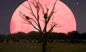 موعد ظهور القمر الوردي العملاق هذا العام!