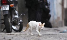 القبض على قط يحمل المخدرات حاول دخول أحد السجون في بنما