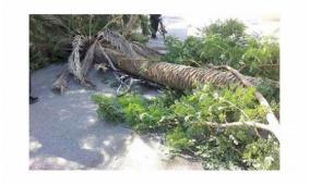 جنين: وفاة مواطن سقطت عليه شجرة اثناء عمله