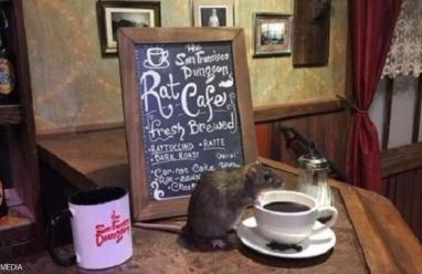 """كاليفورنيا.. أول مطعم يقدم وجبة يرافقها  """"فأر"""""""