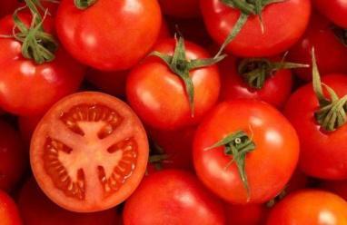 الطماطم قد تكون مضرة احياناً