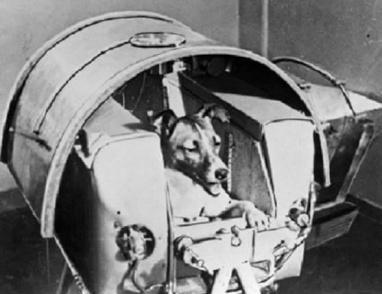 """اخر صورة للكلبه """"لايكا"""" التقطت قبل لحظات من إرسالها إلى الفضاء!"""