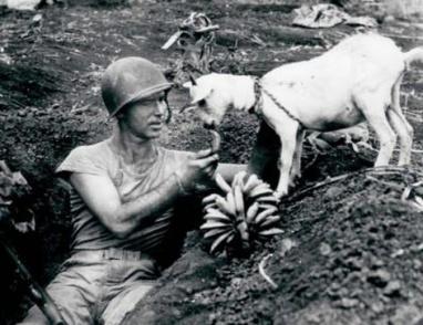 إنسانية محارب