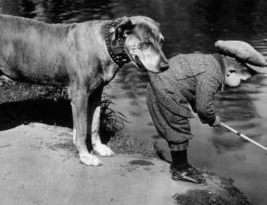 وفاء كلب
