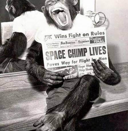 الشمبانزي بعد مهمة ناجحة إلى الفضاء