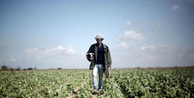 الزراعة في فلسطين..ما بين التطور والانهيار
