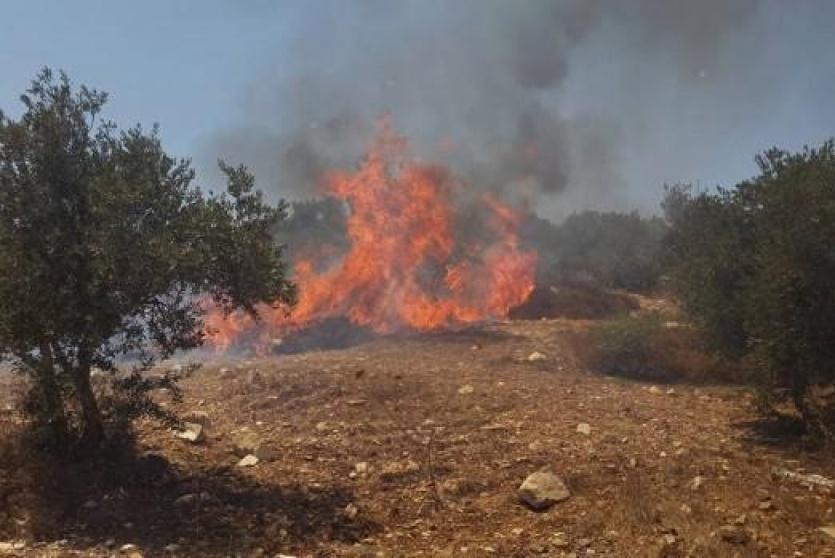 حريق أشجار